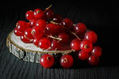 Ripe bunch of red currants on a cut of a tree, dark background royalty free stock photo