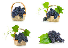 Ripe bunches of dark grapes on a white background. Stock Photography