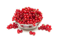 Ripe bunches of juicy red currant isolated on white background Stock Image