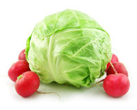 Ripe Cabbage and Radishes Isolated on White Royalty Free Stock Images