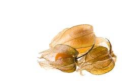 Ripe cape gooseberry (physalis) Stock Image