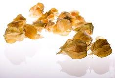 Ripe cape gooseberry (physalis) Stock Photos