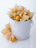 Ripe cape gooseberry or physalis. Physalis in a bucket isolated on white background Stock Image