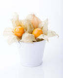 Ripe cape gooseberry or physalis. Physalis in a bucket isolated on white background Royalty Free Stock Photos