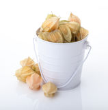 Ripe cape gooseberry or physalis. Physalis in a bucket  on white background Royalty Free Stock Photography