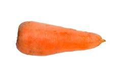 Ripe carrots Stock Image