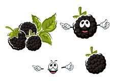 Ripe cartoon blackberries fruits characters Royalty Free Stock Images