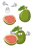 Ripe cartoon green guava fruit Royalty Free Stock Images
