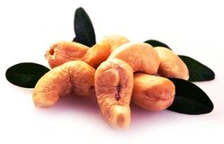 Ripe cashew nuts with leaves Royalty Free Stock Photography