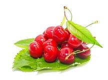 Ripe cherries Royalty Free Stock Photo