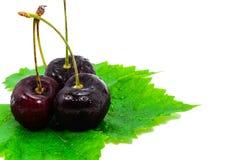 Ripe cherries. Royalty Free Stock Photos