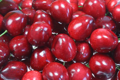 Ripe cherries. Royalty Free Stock Image