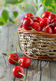Ripe cherries in a basket Royalty Free Stock Photography