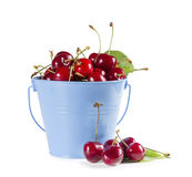 Ripe Cherries in a Blue Bucket Stock Photography