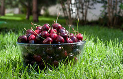 Ripe cherries in a bowl on the grass Royalty Free Stock Images