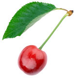 Ripe cherries with green leaf Stock Photography