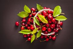 Ripe cherries with green leaves Stock Photography