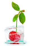 Ripe cherries with green leaves frozen Stock Images