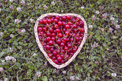 Ripe cherries in heartshaped woven basket on lawn Royalty Free Stock Photography
