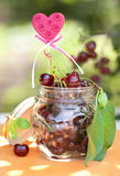 Ripe cherries in a jar on a garden background Stock Images