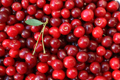 Ripe cherries with a leaf Stock Photos