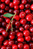 Ripe cherries with a leaf Stock Photography