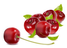Ripe cherries with leaves. stock illustration