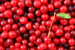 Ripe cherries with leaves Stock Photo