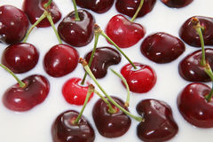Ripe cherries in milk Royalty Free Stock Photo