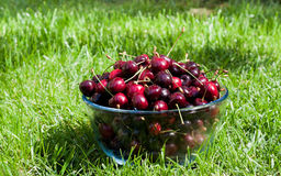 Ripe cherries with sparkling water drops in a glass bowl on the Royalty Free Stock Images