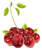 Ripe cherries with water drops and leaves. Photo-realistic . Ripe cherries with water drops and leaves Stock Photos