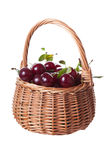 Ripe cherries Stock Images
