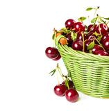 Ripe cherries in wicker basket Stock Image