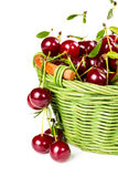 Ripe cherries in wicker basket Royalty Free Stock Photo