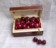 Ripe cherries Stock Image
