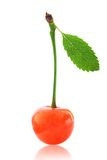Ripe cherry Royalty Free Stock Images