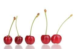 Ripe cherry berries Royalty Free Stock Photo