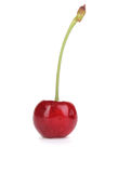 Ripe cherry berry Stock Photo