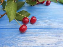 Ripe cherry berry healthy on a blue wooden background, summer frame. Ripe cherry berry on a blue wooden background frame summer healthy Stock Image