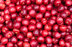 Ripe cherry closeup. Fresh red cherry closeup . Healthy food background Royalty Free Stock Images