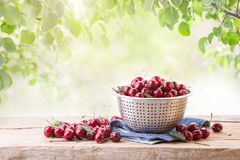 Ripe cherry in a colander on a wooden board. On a background of green leaves Royalty Free Stock Photo