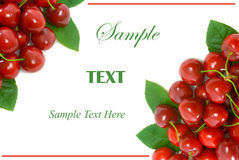 Ripe Cherry Corner Border with copy space Stock Image