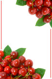 Ripe Cherry Corner Border with copy space Royalty Free Stock Image