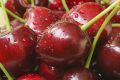 Ripe cherry dark red color close-up Royalty Free Stock Photos