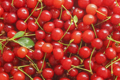 Ripe cherry. Ripe fresh cherries in placer as a background Royalty Free Stock Photos