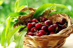Ripe cherry fruit in a basket Royalty Free Stock Photography
