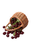 Ripe cherry Stock Photography