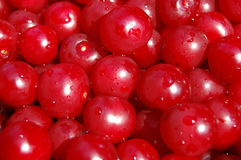 Ripe cherry. Ripe juicy red cherry with drops Stock Photos
