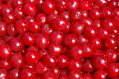 Ripe cherry Royalty Free Stock Photography