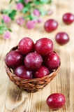 Ripe cherry plum Royalty Free Stock Images